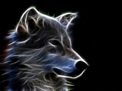 Abstract Wolf Art
